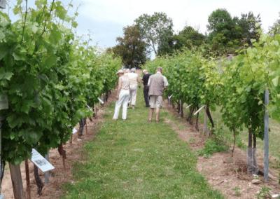 """<a href=""""http://www.lhebdo17.fr/saintonge-viticulture-lart-et-la-maniere-de-se-distinguer"""">L'art et la manière de se distinguer</a>"""